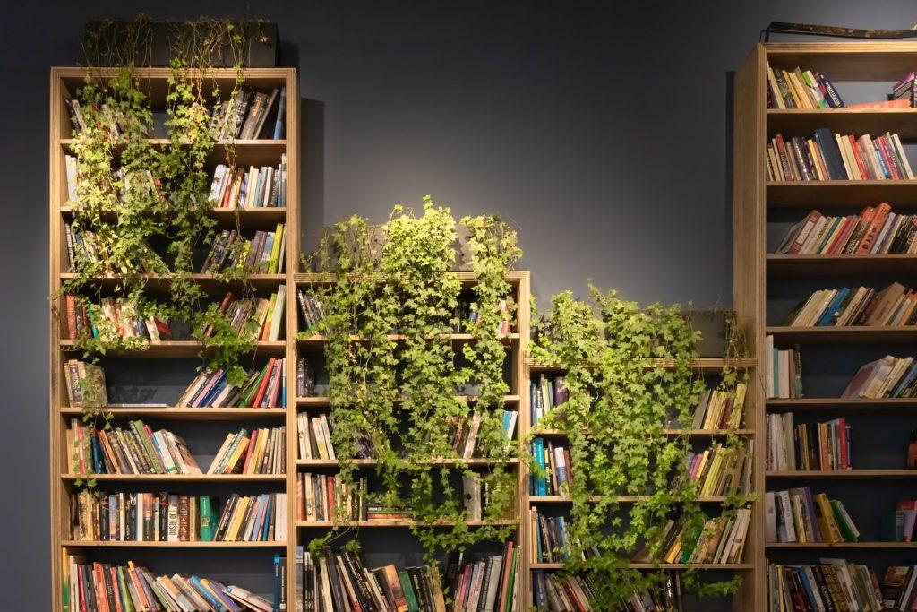 bibliothèque murale avec plantes vertes