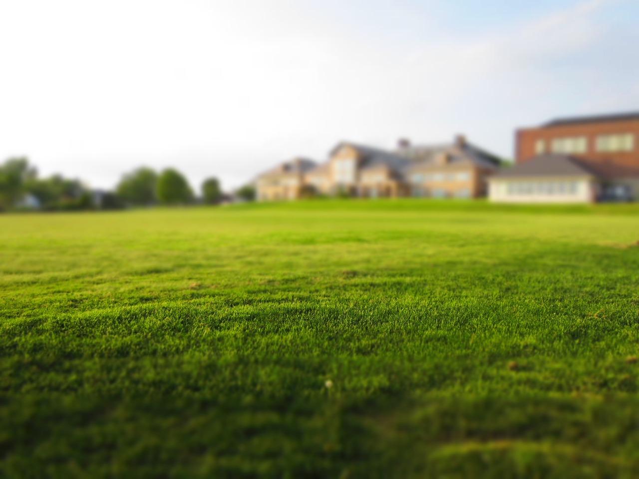 entretenir au mieux la pelouse de son jardin